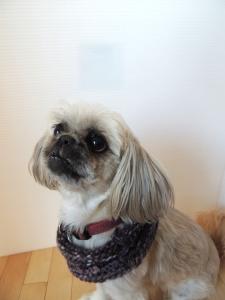 Dog neck warmer or is it an ear warmer?