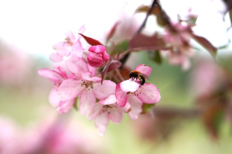 bee happy photo shoot6