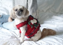 dog-dress-christmas-red11