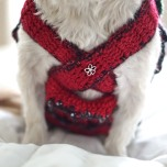 dog-dress-christmas-red19